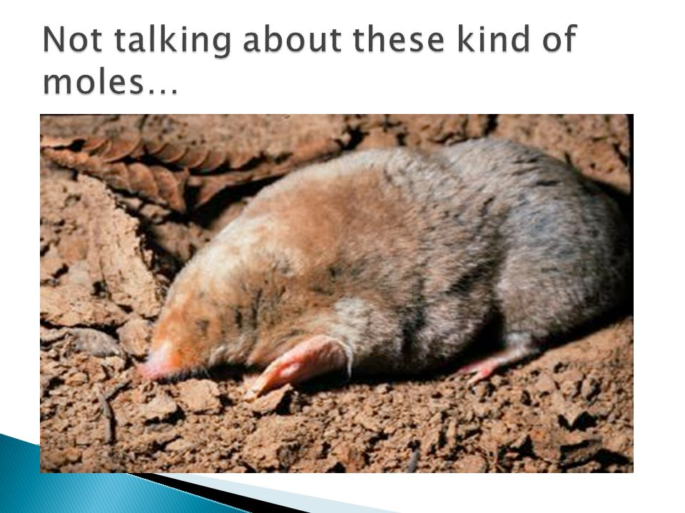 Not talking about these kind of moles…