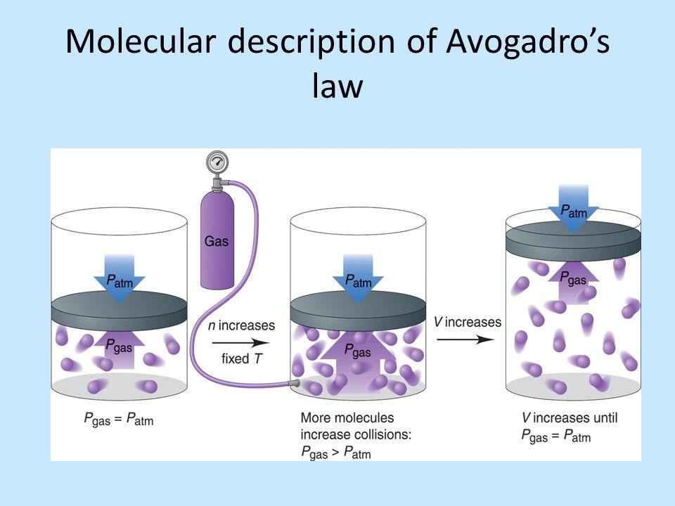 Molecular description of Avogadro's law