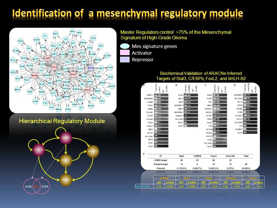 Identification of a mesenchymal regulatory module