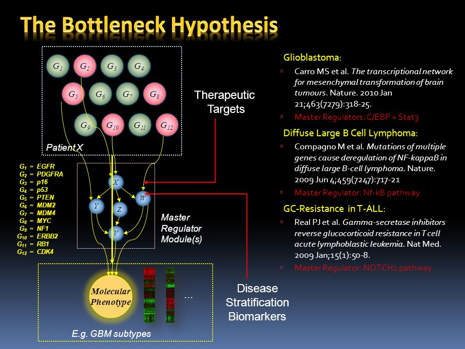 The Bottleneck Hypothesis