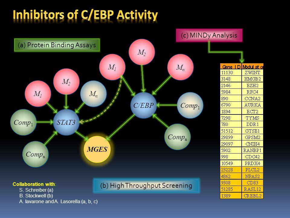 Inhibitors of C/EBP Activity