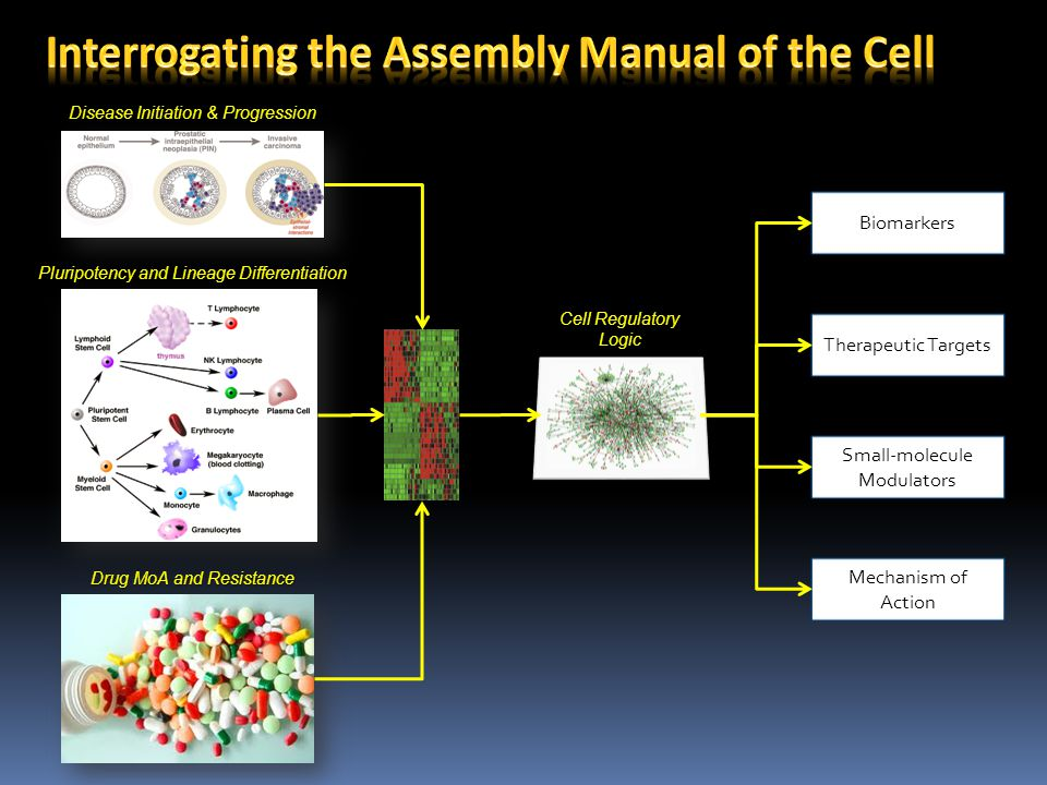 Interrogating the Assembly Manual of the Cell