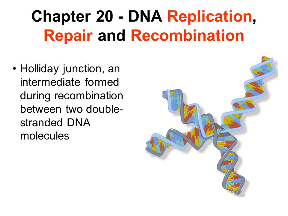 Chapter 20 - DNA Replication, Repair and Recombination