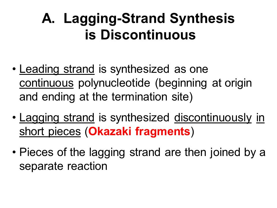 A. Lagging-Strand Synthesis is Discontinuous