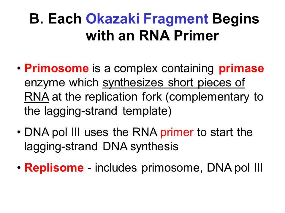 B. Each Okazaki Fragment Begins with an RNA Primer