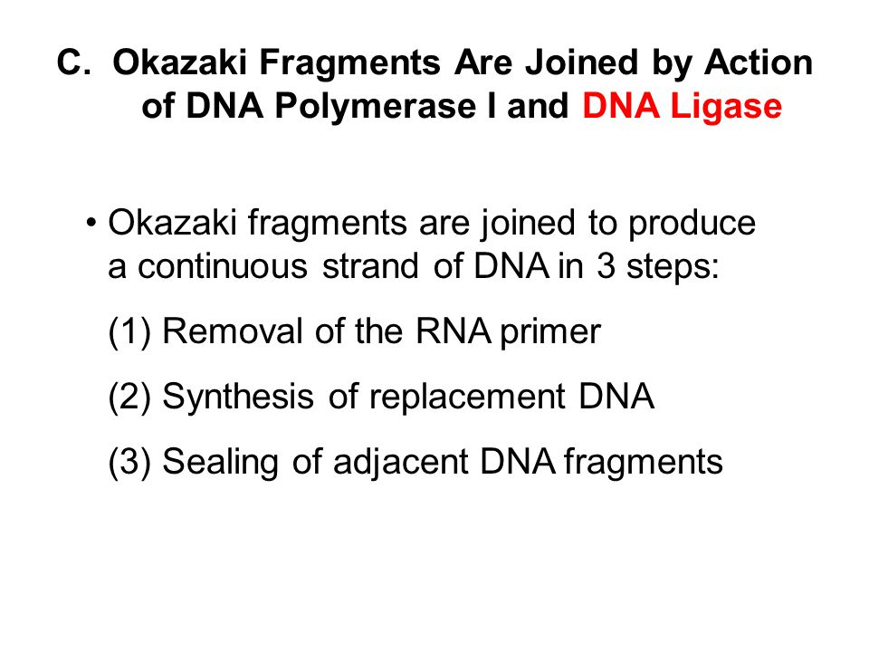 C. Okazaki Fragments Are Joined by Action of DNA Polymerase I and DNA Ligase
