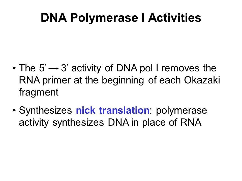 DNA Polymerase I Activities