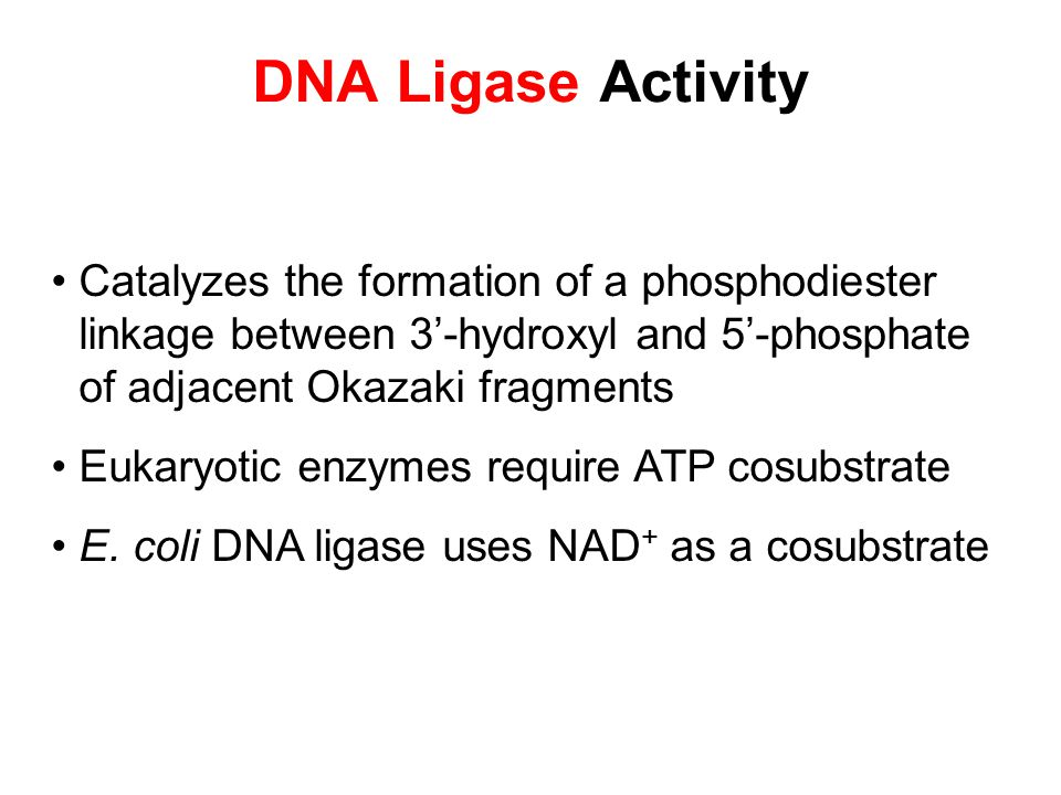 DNA Ligase Activity Catalyzes the formation of a phosphodiester linkage between 3'-hydroxyl and 5'-phosphate of adjacent Okazaki fragments.