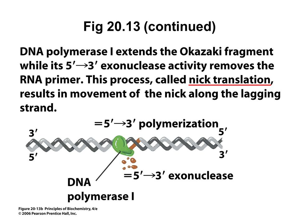 Fig 20.13 (continued)