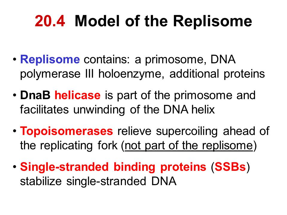 20.4 Model of the Replisome Replisome contains: a primosome, DNA polymerase III holoenzyme, additional proteins.