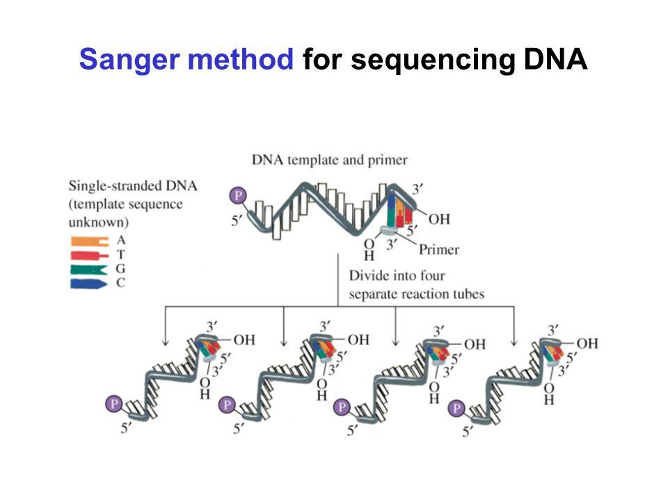 Sanger method for sequencing DNA