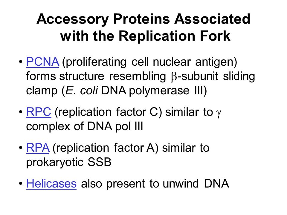 Accessory Proteins Associated with the Replication Fork