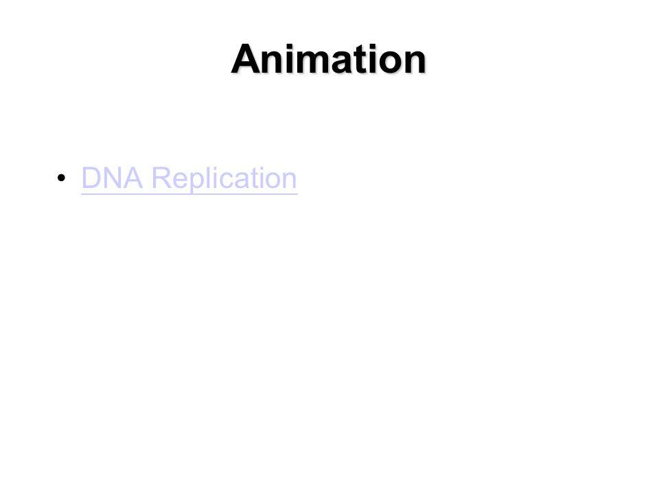 Animation DNA Replication