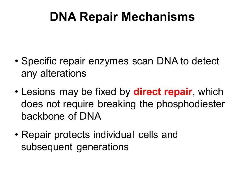 DNA Repair Mechanisms Specific repair enzymes scan DNA to detect any alterations.