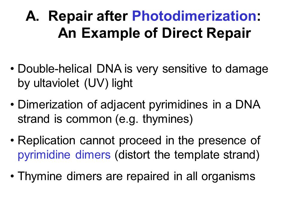 A. Repair after Photodimerization: An Example of Direct Repair