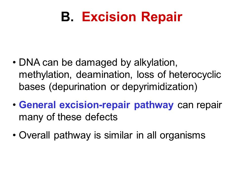 B. Excision Repair DNA can be damaged by alkylation, methylation, deamination, loss of heterocyclic bases (depurination or depyrimidization)