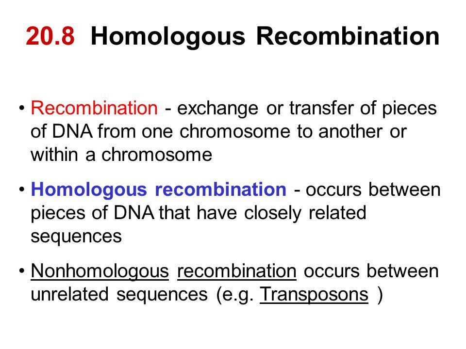 20.8 Homologous Recombination