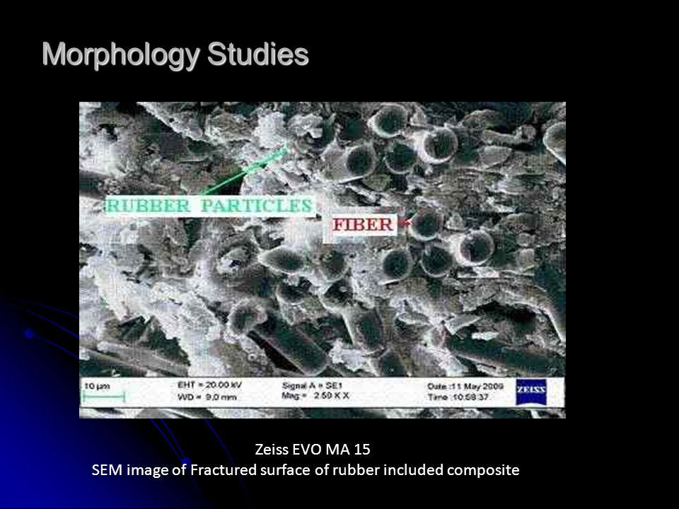 Morphology Studies Zeiss EVO MA 15