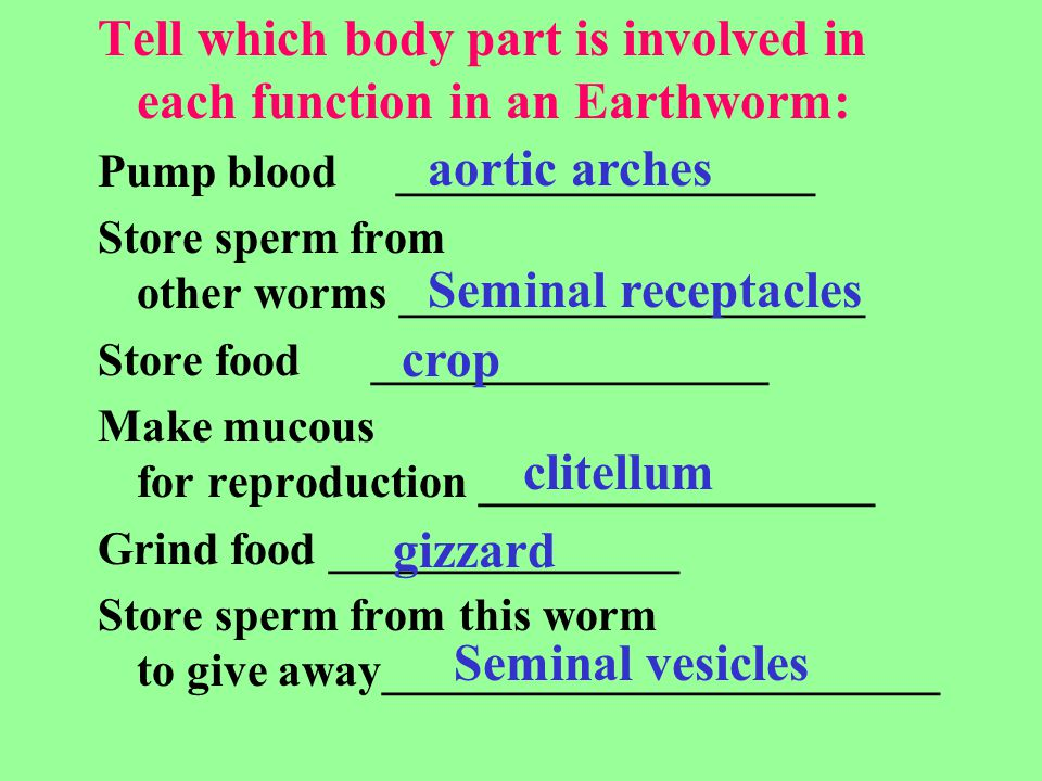 Tell which body part is involved in each function in an Earthworm:
