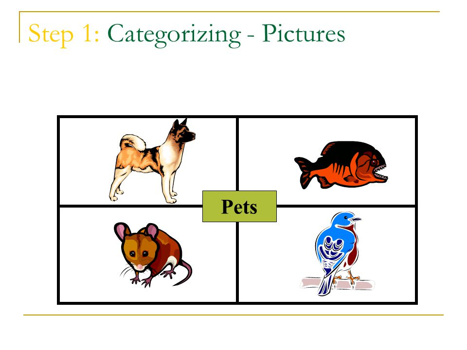 Step 1: Categorizing - Pictures