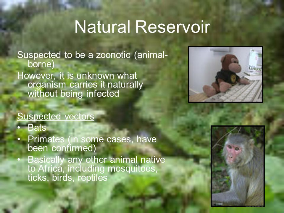 Natural Reservoir Suspected to be a zoonotic (animal-borne)