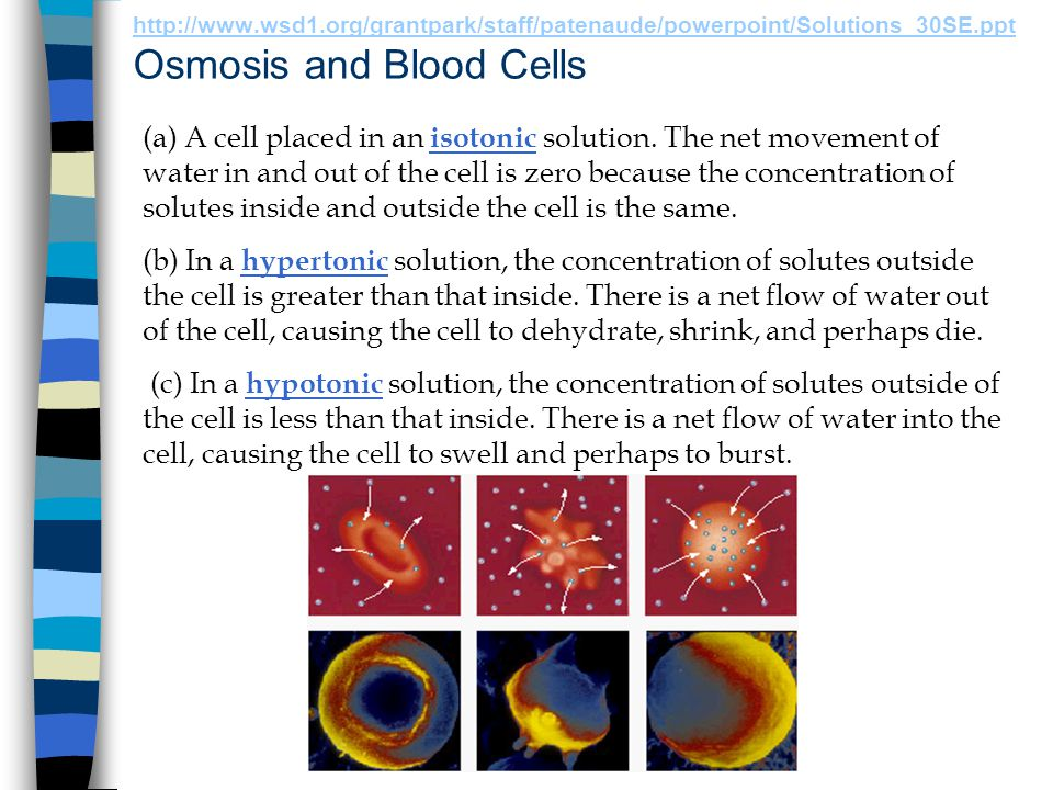 http://www.wsd1.org/grantpark/staff/patenaude/powerpoint/Solutions_30SE.ppt Osmosis and Blood Cells