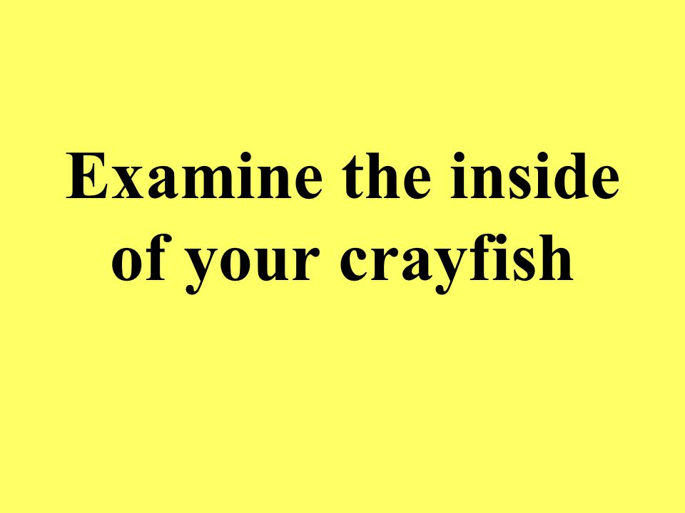 Examine the inside of your crayfish