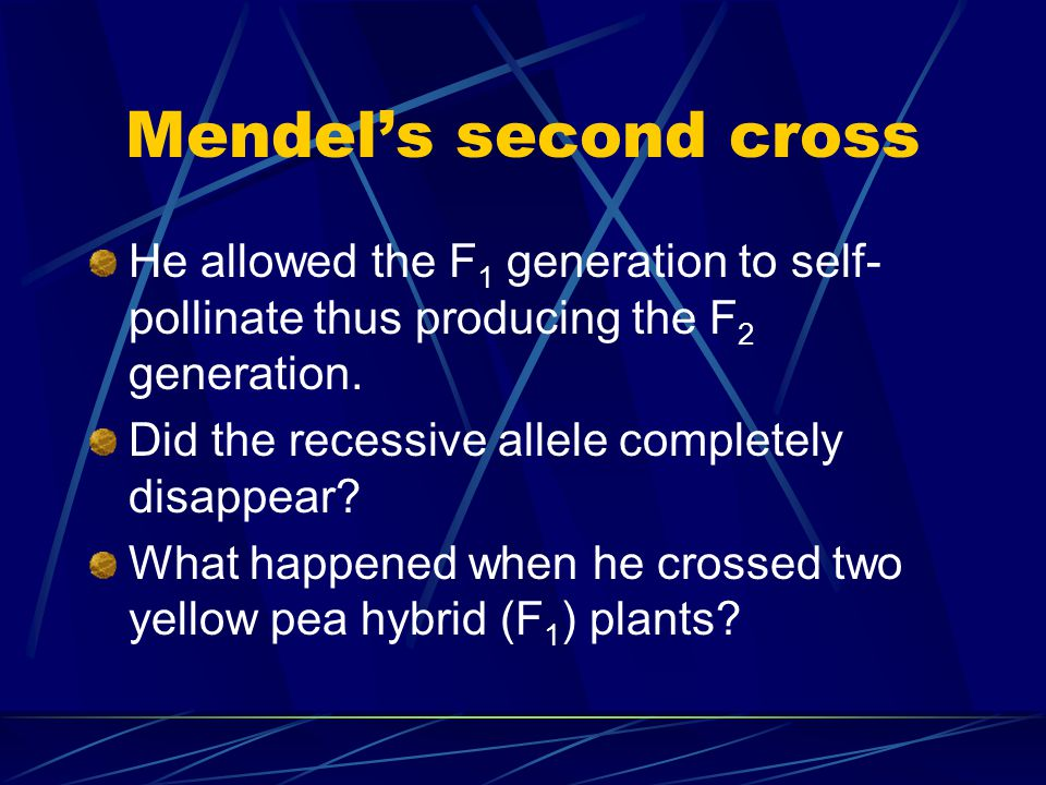 Mendel's second cross He allowed the F1 generation to self-pollinate thus producing the F2 generation.