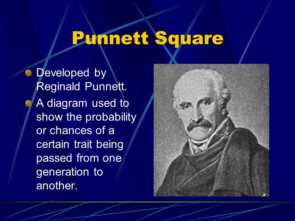 Punnett Square Developed by Reginald Punnett.
