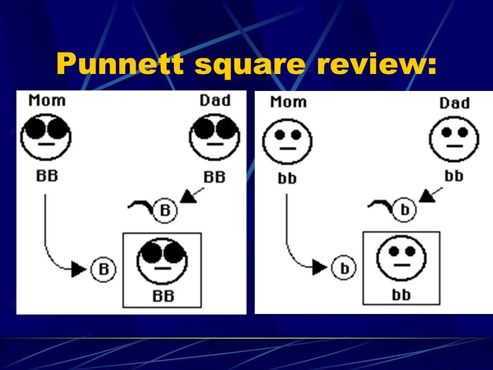 Punnett square review: