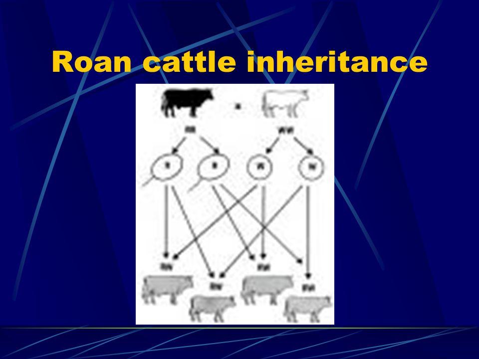 Roan cattle inheritance