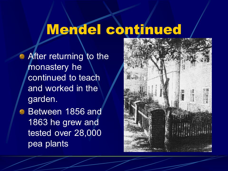 Mendel continued After returning to the monastery he continued to teach and worked in the garden.