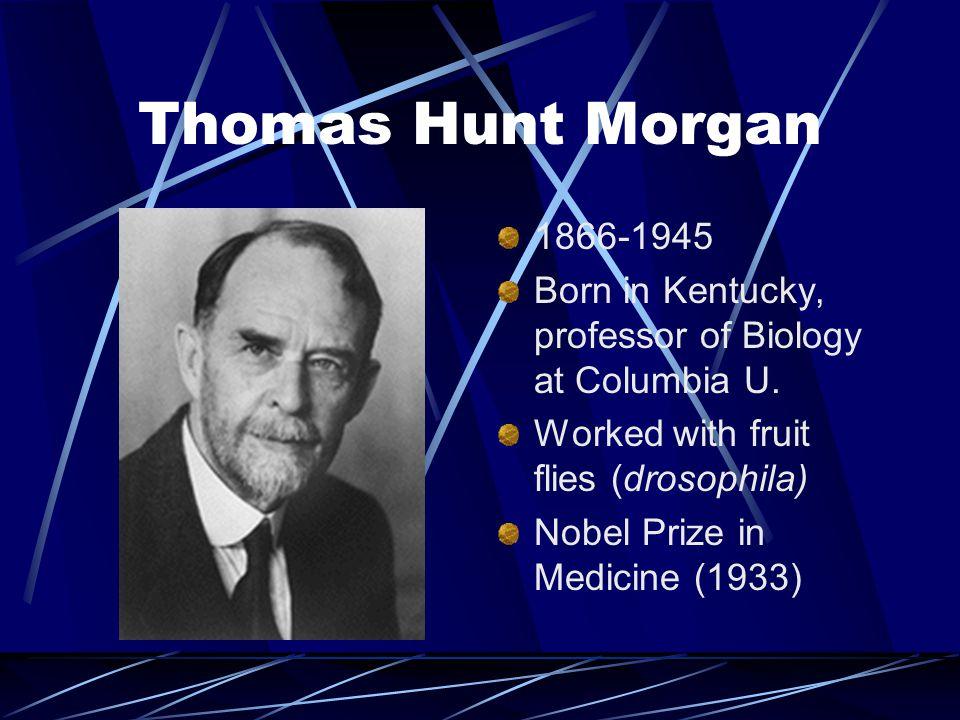 Thomas Hunt Morgan 1866-1945. Born in Kentucky, professor of Biology at Columbia U. Worked with fruit flies (drosophila)