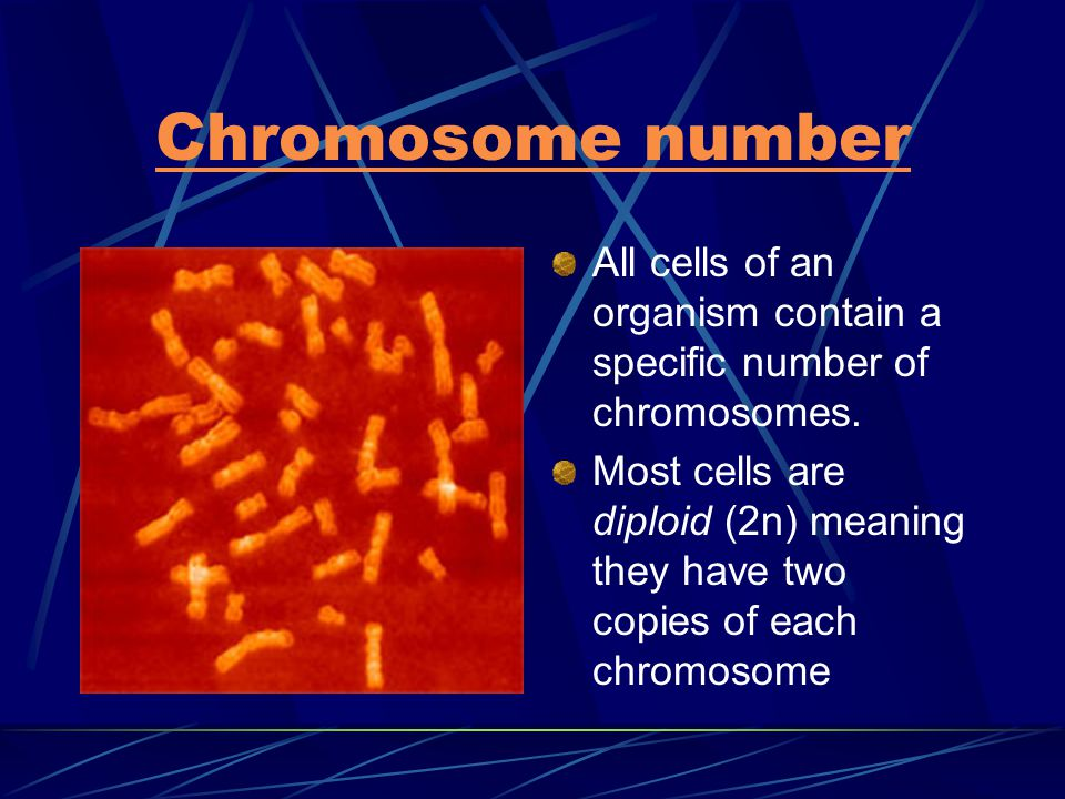 Chromosome number All cells of an organism contain a specific number of chromosomes.