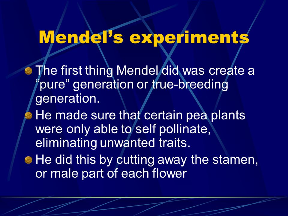 Mendel's experiments The first thing Mendel did was create a pure generation or true-breeding generation.