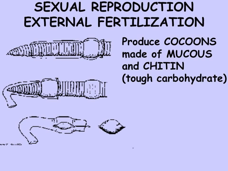 SEXUAL REPRODUCTION EXTERNAL FERTILIZATION