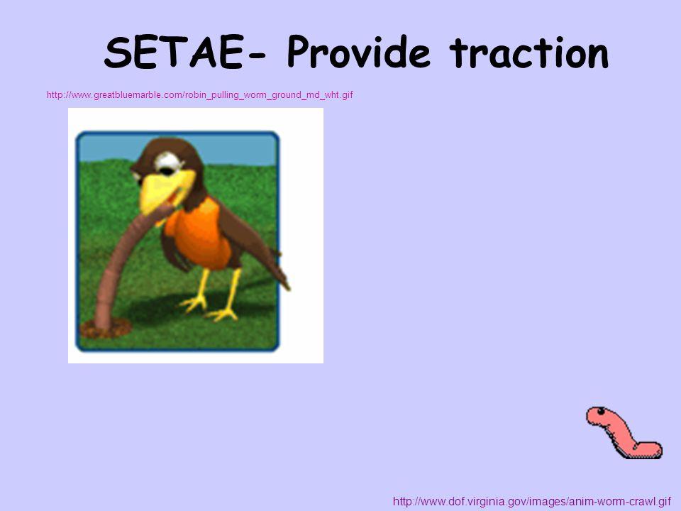 SETAE- Provide traction