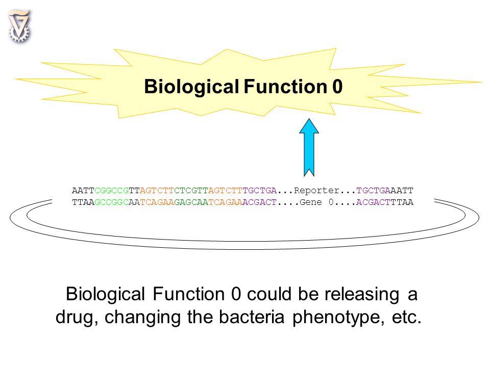Biological Function 0 AATTCGGCCGTTAGTCTTCTCGTTAGTCTTTGCTGA...Reporter...TGCTGAAATT. TTAAGCCGGCAATCAGAAGAGCAATCAGAAACGACT....Gene 0....ACGACTTTAA.