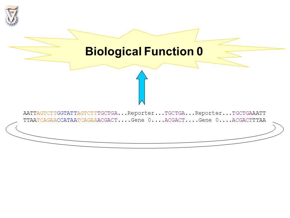 Biological Function 0 AATTAGTCTTGGTATTAGTCTTTGCTGA...Reporter...TGCTGA...Reporter...TGCTGAAATT.