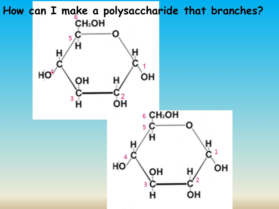 How can I make a polysaccharide that branches