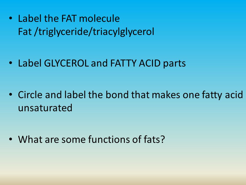 Label the FAT molecule Fat /triglyceride/triacylglycerol