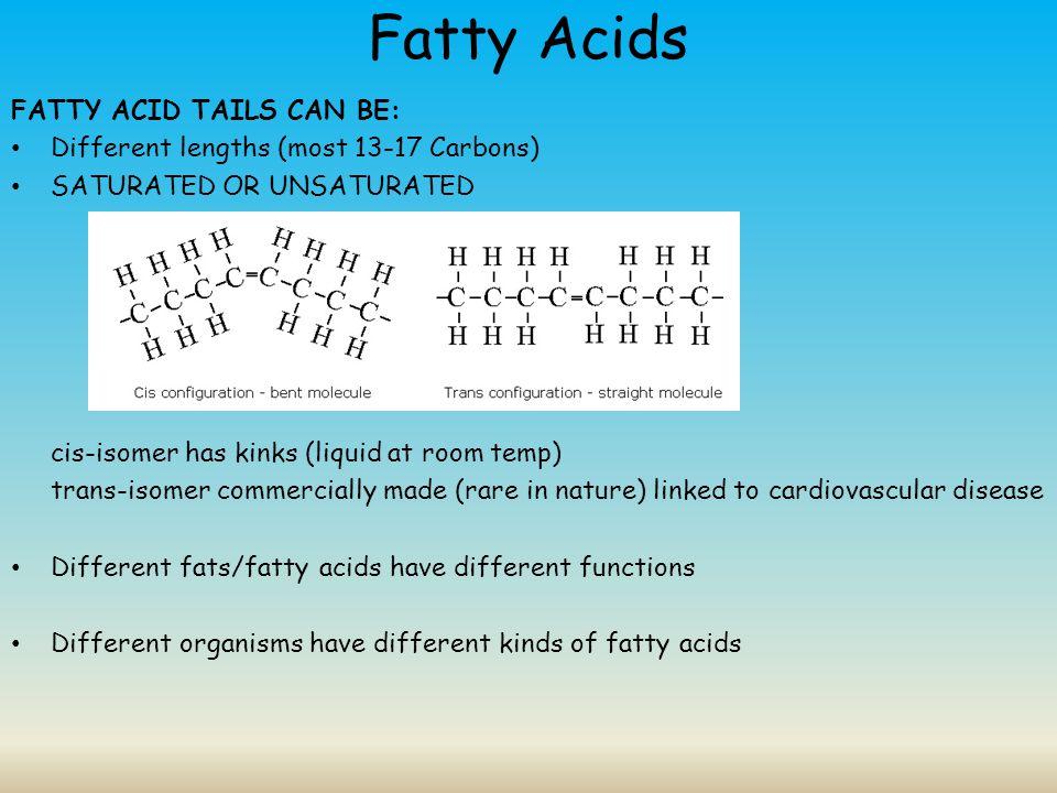 Fatty Acids FATTY ACID TAILS CAN BE:
