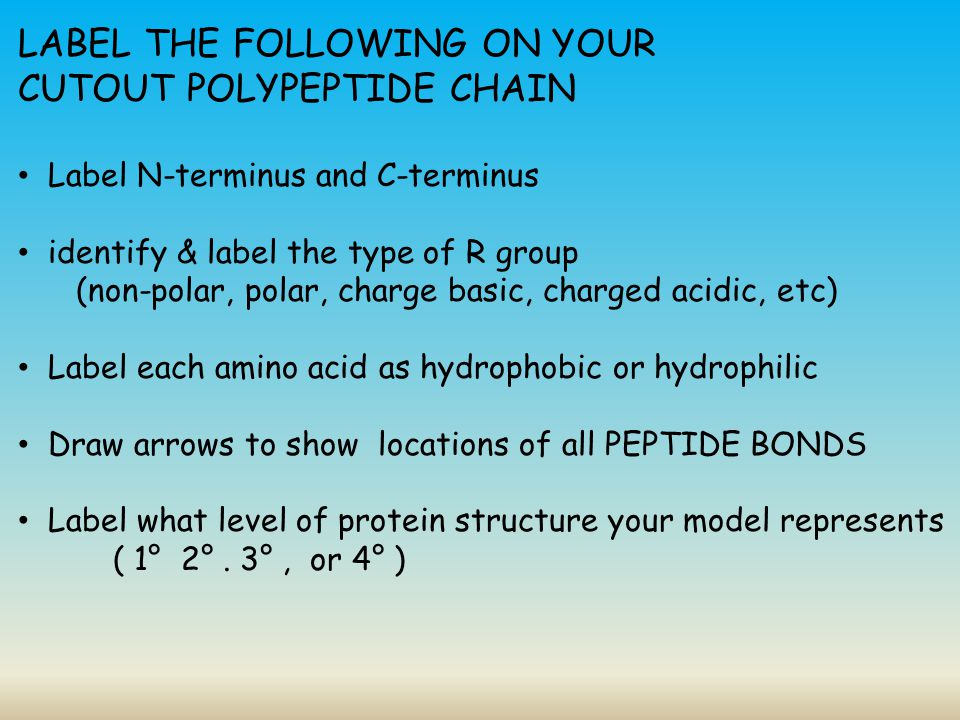 LABEL THE FOLLOWING ON YOUR CUTOUT POLYPEPTIDE CHAIN
