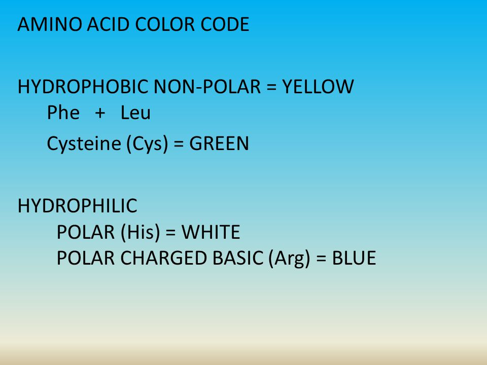 AMINO ACID COLOR CODE HYDROPHOBIC NON-POLAR = YELLOW Phe + Leu Cysteine (Cys) = GREEN HYDROPHILIC POLAR (His) = WHITE POLAR CHARGED BASIC (Arg) = BLUE