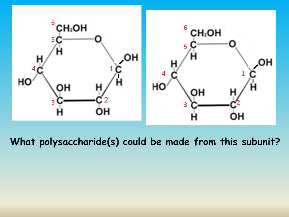 What polysaccharide(s) could be made from this subunit