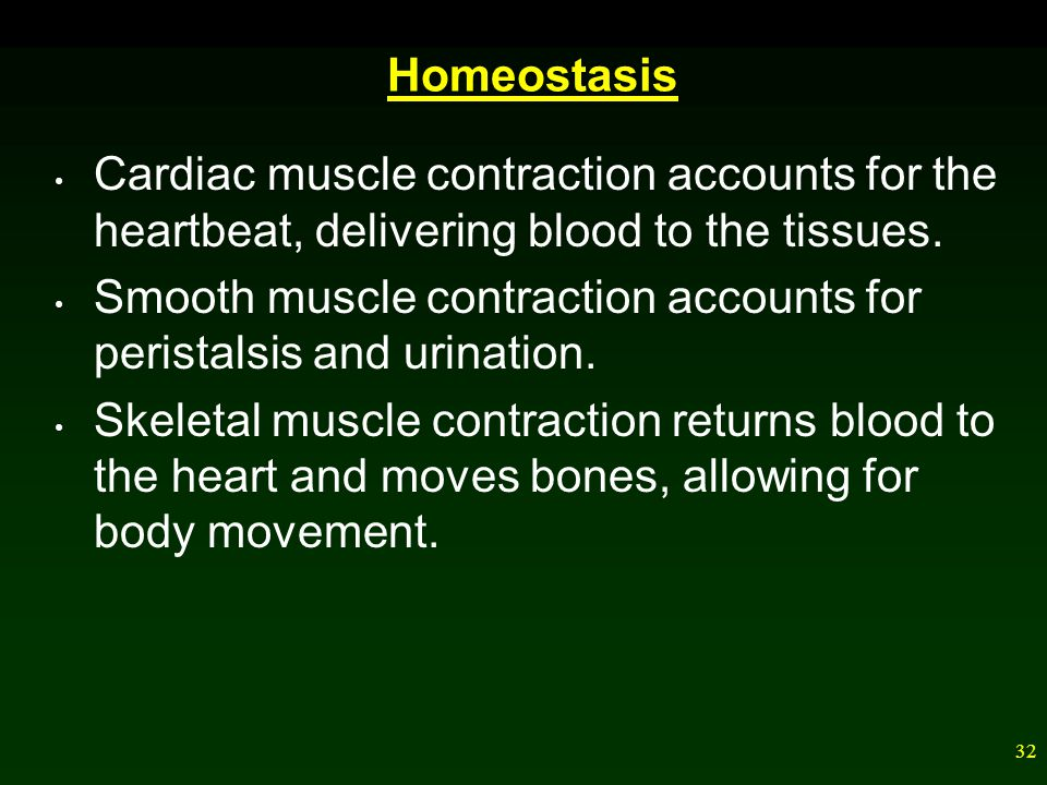 Homeostasis Cardiac muscle contraction accounts for the heartbeat, delivering blood to the tissues.