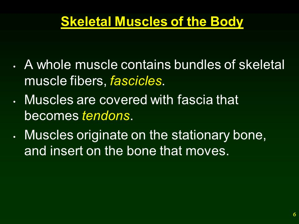 Skeletal Muscles of the Body
