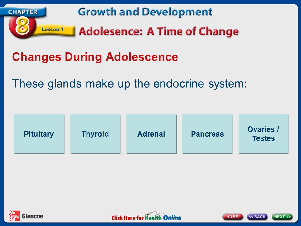 Changes During Adolescence