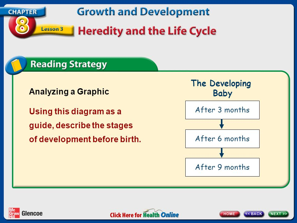 The Developing Baby Analyzing a Graphic