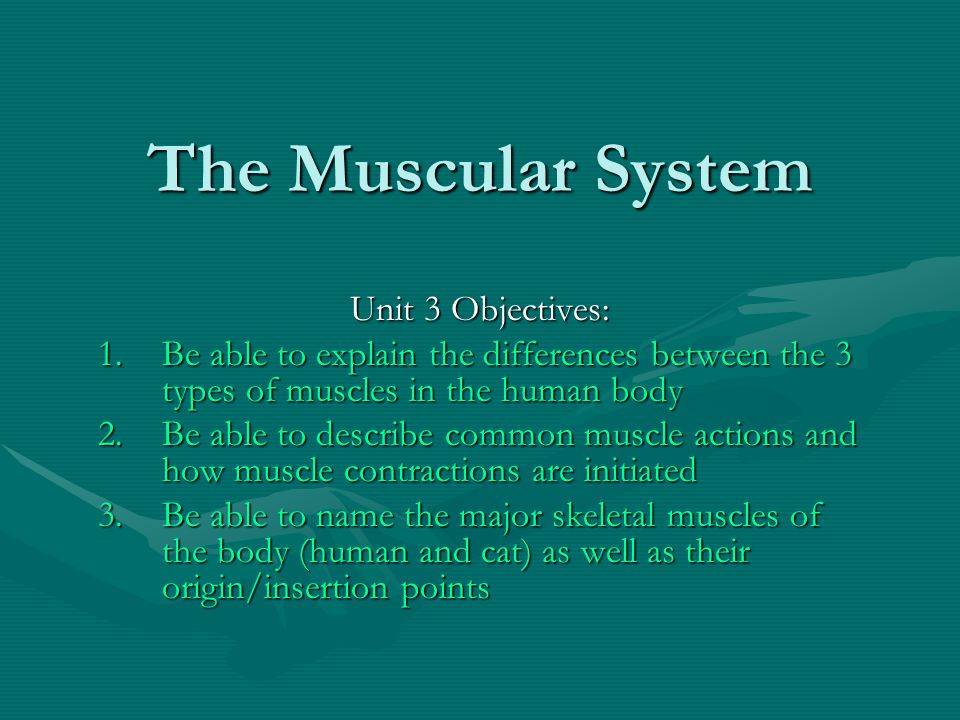 The Muscular System Unit 3 Objectives: